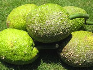 bfruit1