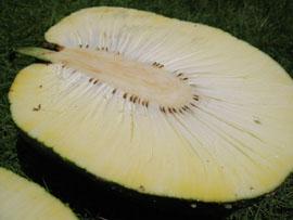 bfruit3