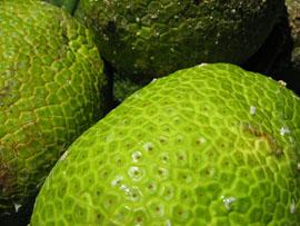 bfruit4