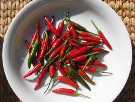 chilli2