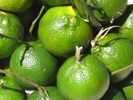 dalandan fruit