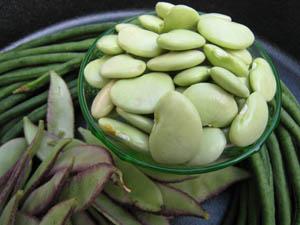 bean1