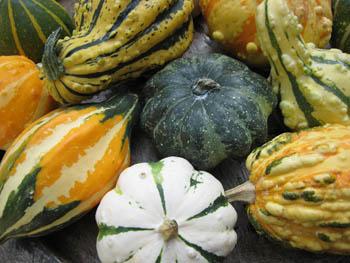 gourd1