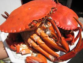 crab2