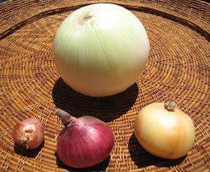 onion1