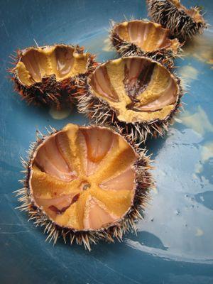 urchins2
