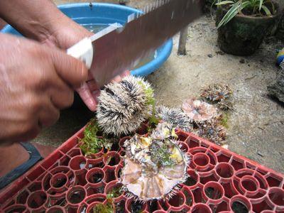 urchins3