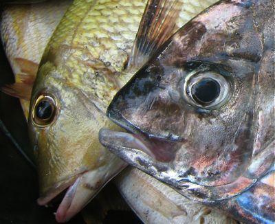 fisheyes1