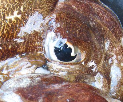 fisheyes2