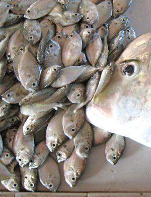 fisheyes6