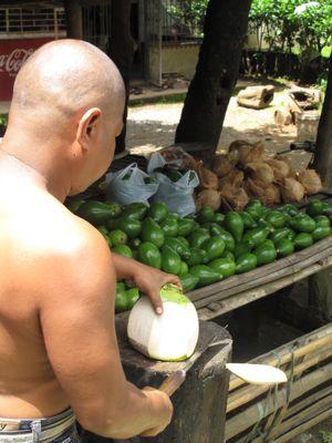 coconuts2