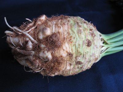 celeriac1