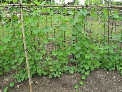 garden82