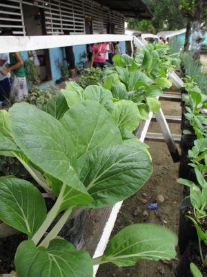 veggies6